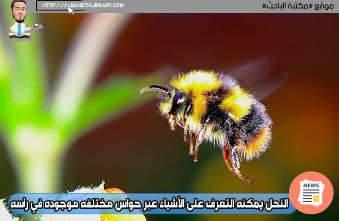 النحل يمكنه التعرف على الأشياء عبر حواس مختلفه موجوده في رأسه