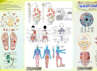 مخطط إنعكاسات الجسم